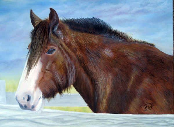 Draught Horse from Churchill Island
