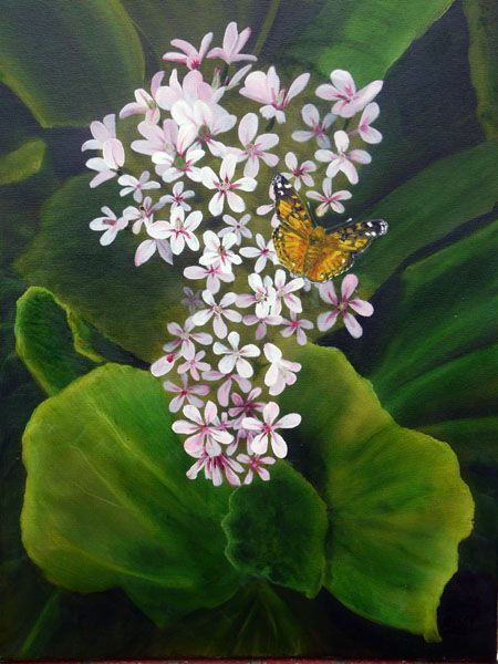Australian Painted Lady Butterfly on Pink Flowers - Oil Painting